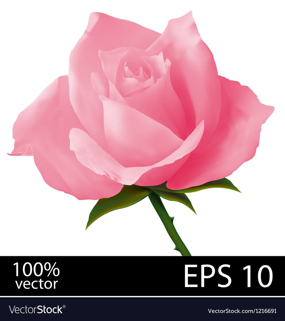 Pink rose realistic vector | Price: 1 Credit (USD $1)