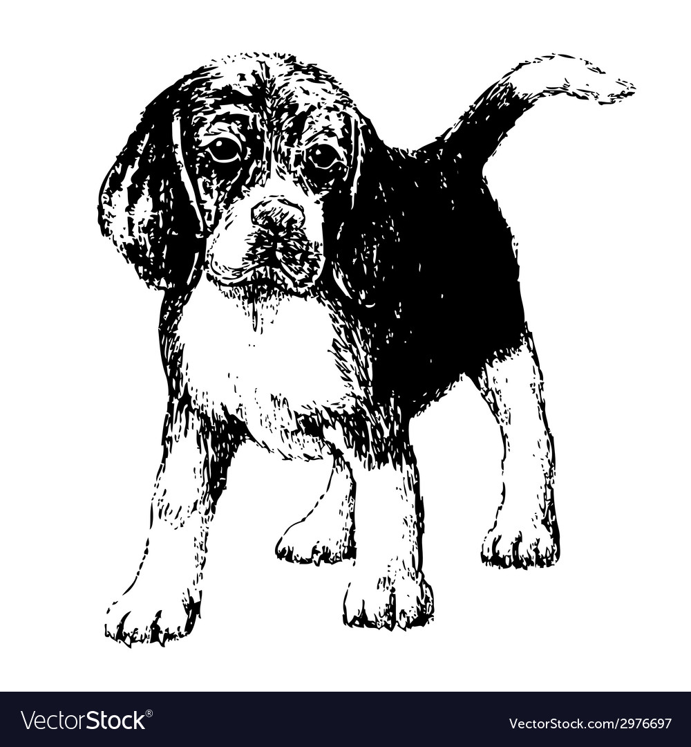 Beagle bw vector | Price: 1 Credit (USD $1)