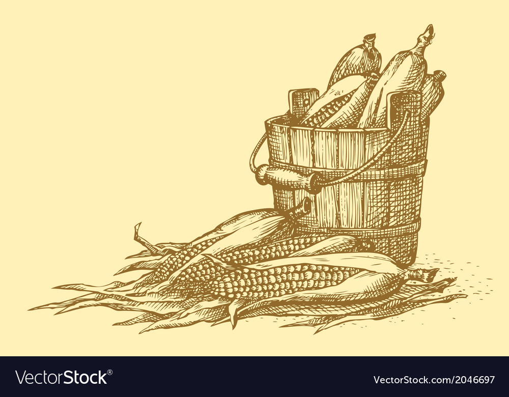 Harvest of corn cobs in an old wooden bucket vector | Price: 1 Credit (USD $1)