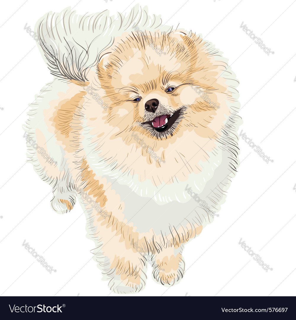 Pedigreed dog vector | Price: 3 Credit (USD $3)