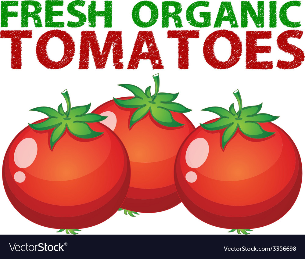 Fresh tomatoes vector | Price: 1 Credit (USD $1)