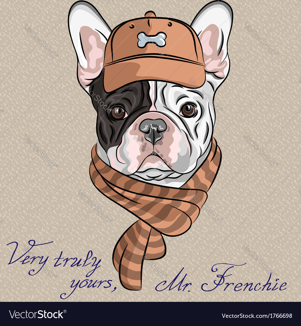 Hipster dog french bulldog vector | Price: 1 Credit (USD $1)
