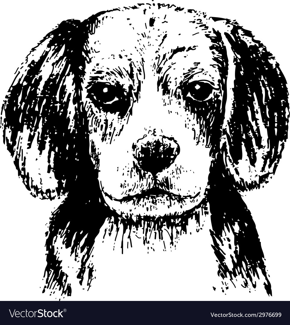 Beagle head bw vector | Price: 1 Credit (USD $1)