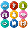Buttons with the different body parts vector