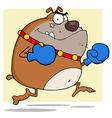 Angry bulldog boxer vector