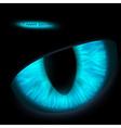 Animals eyes vector