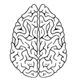 Brain top vector