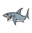 Big grey shark vector