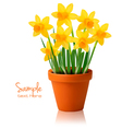 Daffodil flower background vector