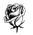 Rose bud sketch vector