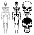 Set of skeletons and skulls vector