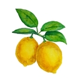 Watercolor lemons hanging on branch with leaves vector