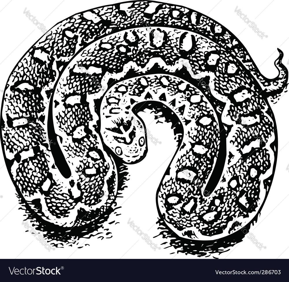 Echis venomous viper vector | Price: 1 Credit (USD $1)