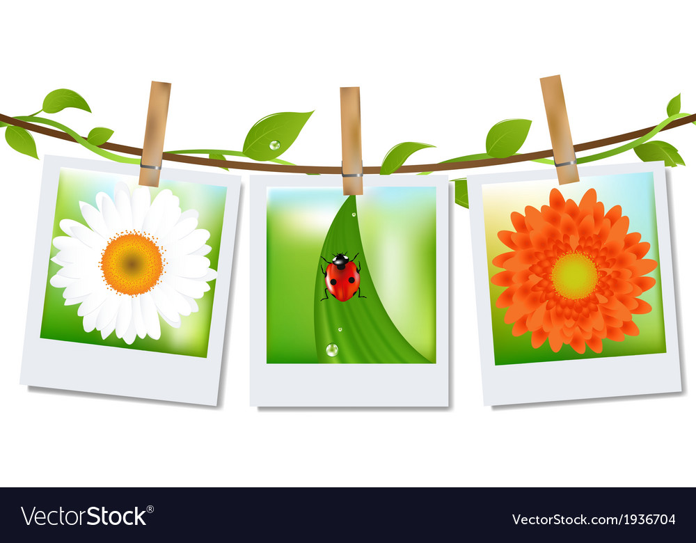Photo frames with nature image vector | Price: 1 Credit (USD $1)