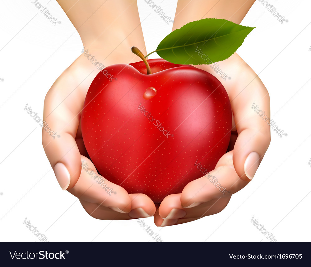 Ed ripe apple in a hands concept of diet vector | Price: 3 Credit (USD $3)