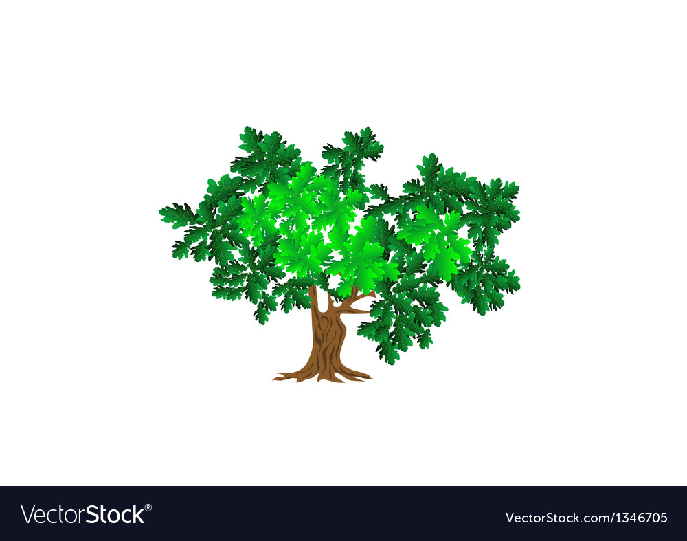 Green oak vector | Price: 1 Credit (USD $1)