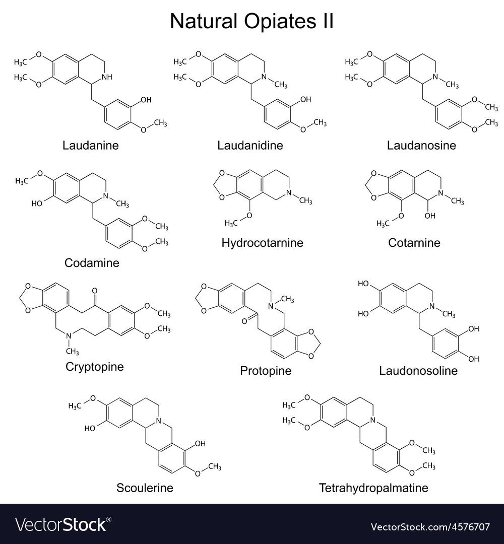 Chemical formulas of main natural opiates vector | Price: 1 Credit (USD $1)