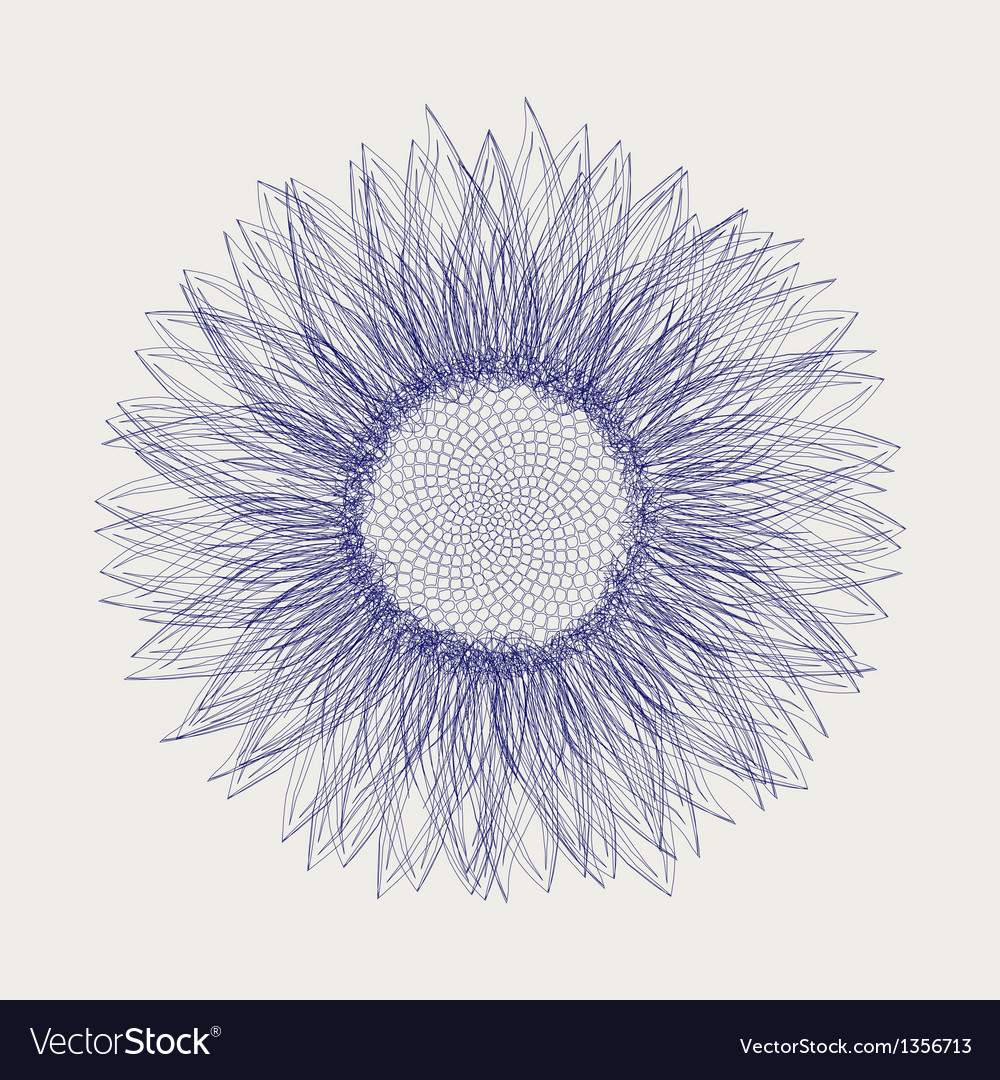 Sunflower sketch design vector | Price: 1 Credit (USD $1)