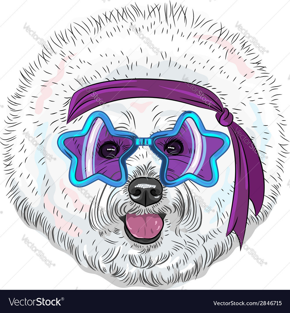 Hipster star disco dog bichon breed vector | Price: 1 Credit (USD $1)
