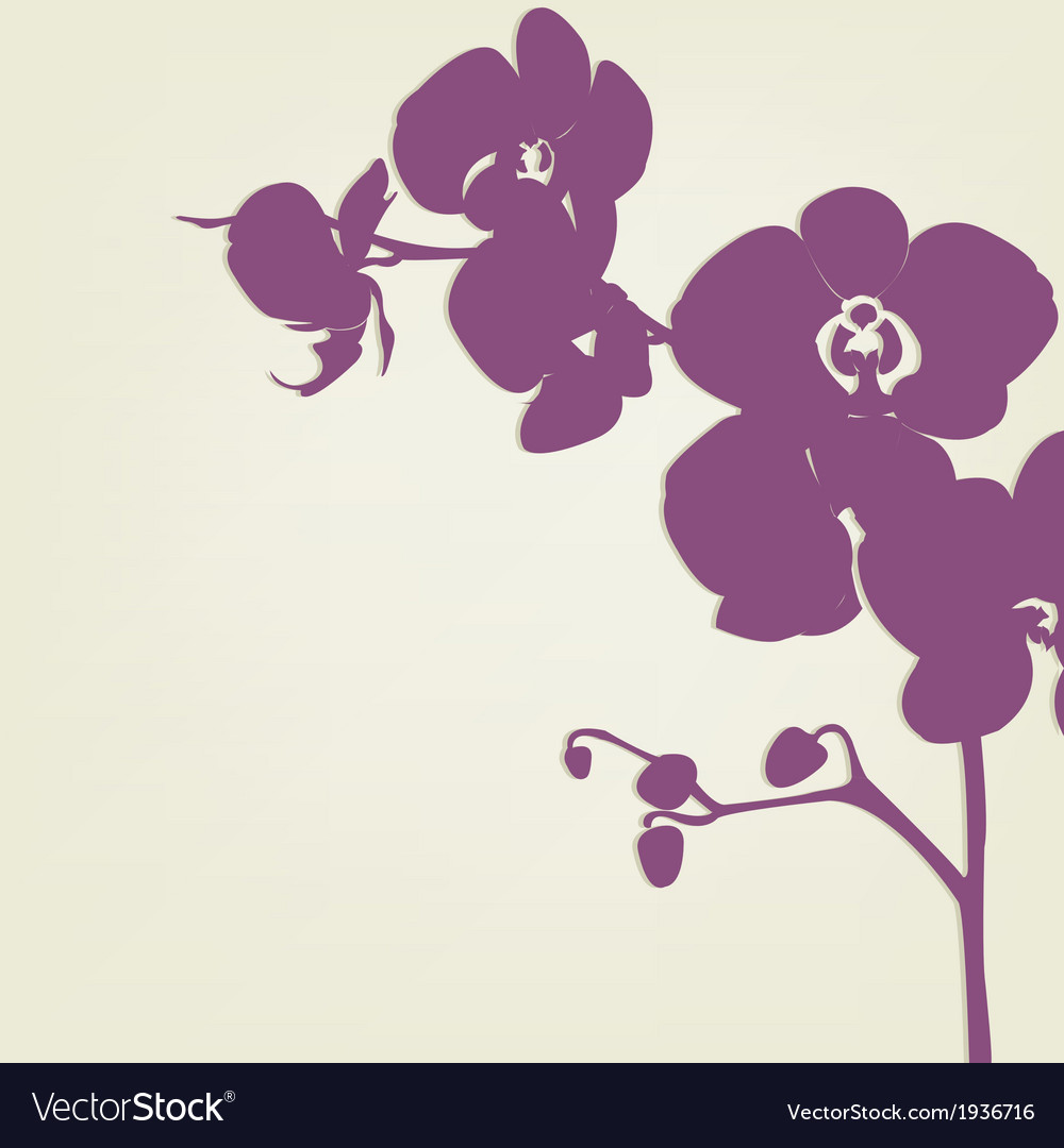 Orchid vector | Price: 1 Credit (USD $1)