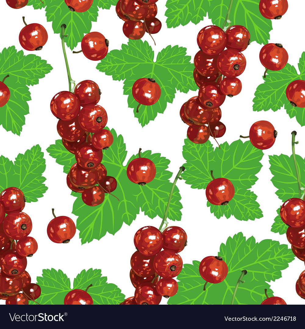 Currant pattern vector | Price: 1 Credit (USD $1)