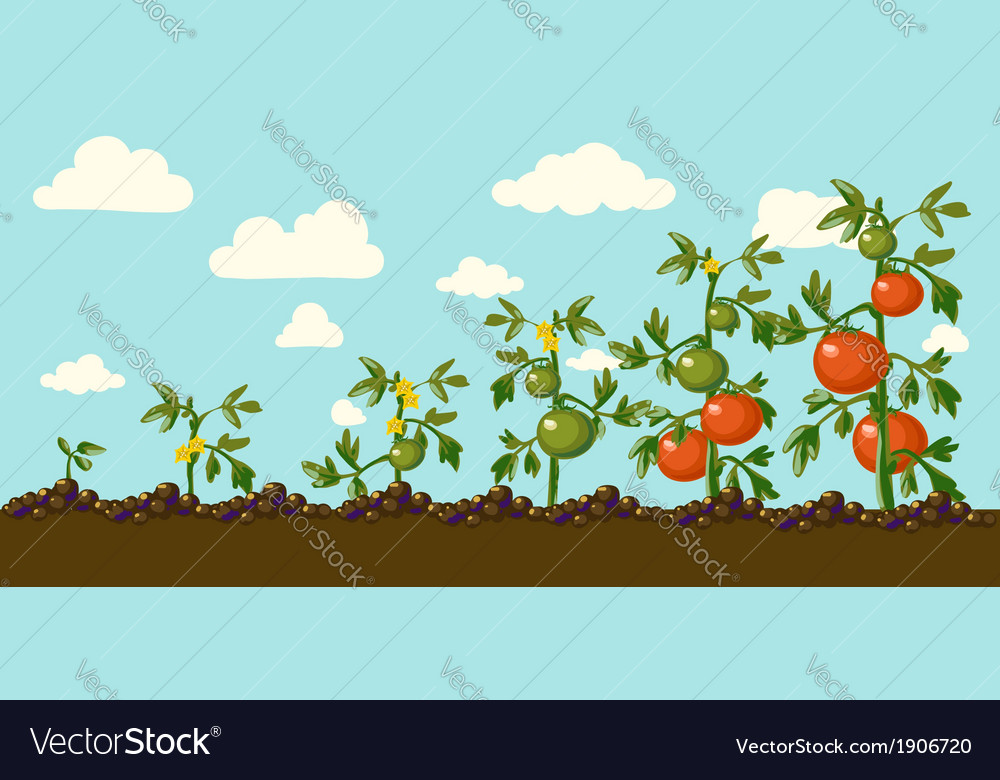 Garden vector | Price: 1 Credit (USD $1)