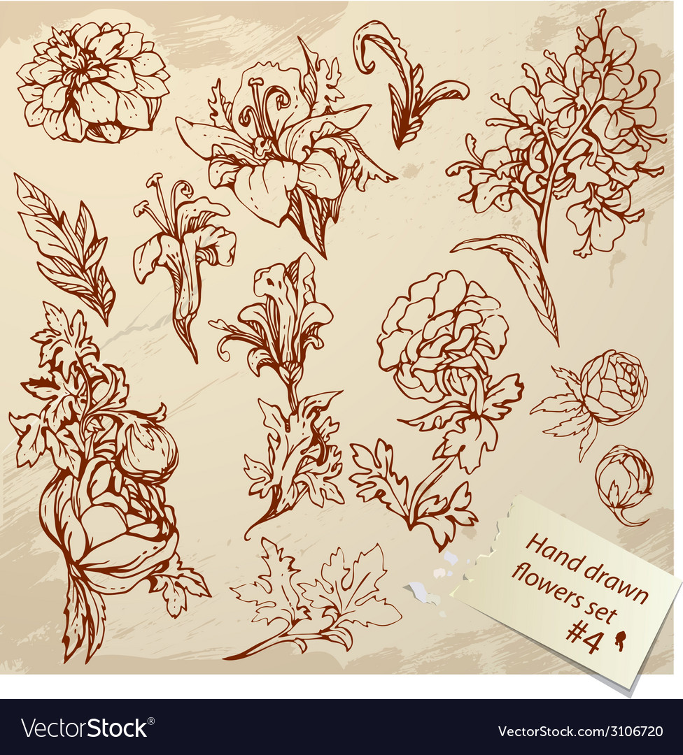 Set of vintage realistic graphic flowers - hand dr vector | Price: 1 Credit (USD $1)