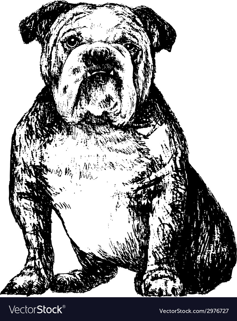 Bulldog bw vector | Price: 1 Credit (USD $1)