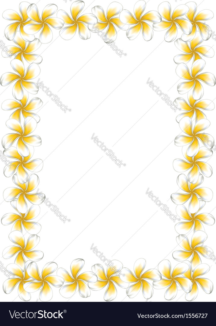 White frangipani flowers frame vector | Price: 1 Credit (USD $1)
