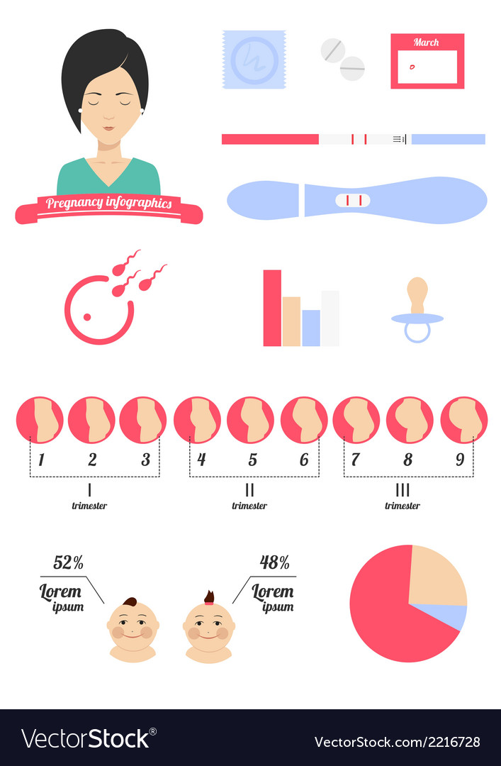 Pregnancy infographics vector | Price: 1 Credit (USD $1)