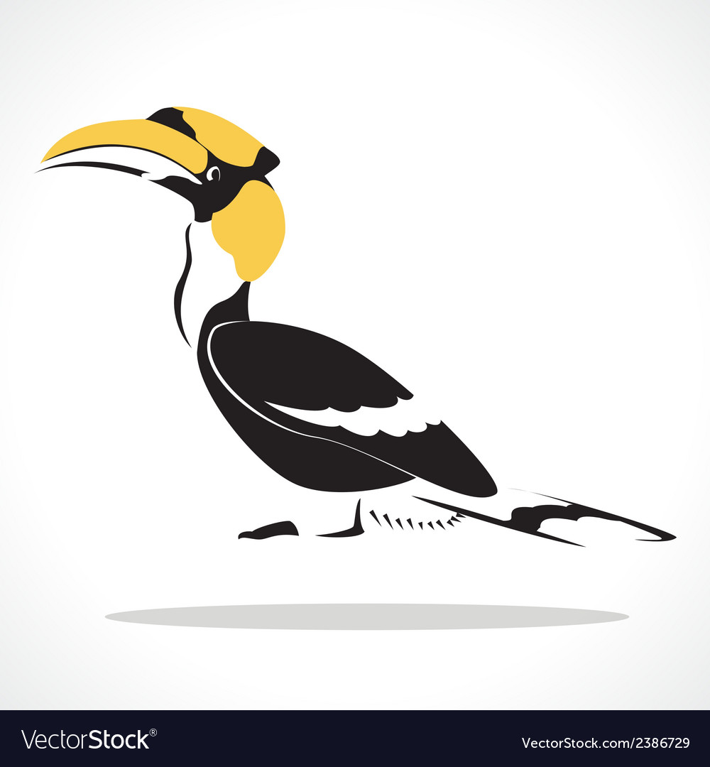 Hornbill vector | Price: 1 Credit (USD $1)