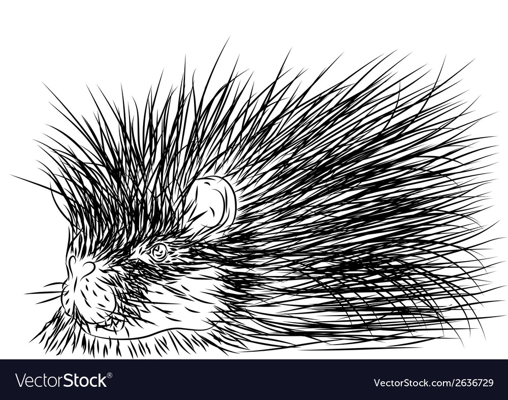 Porcupine vector | Price: 1 Credit (USD $1)
