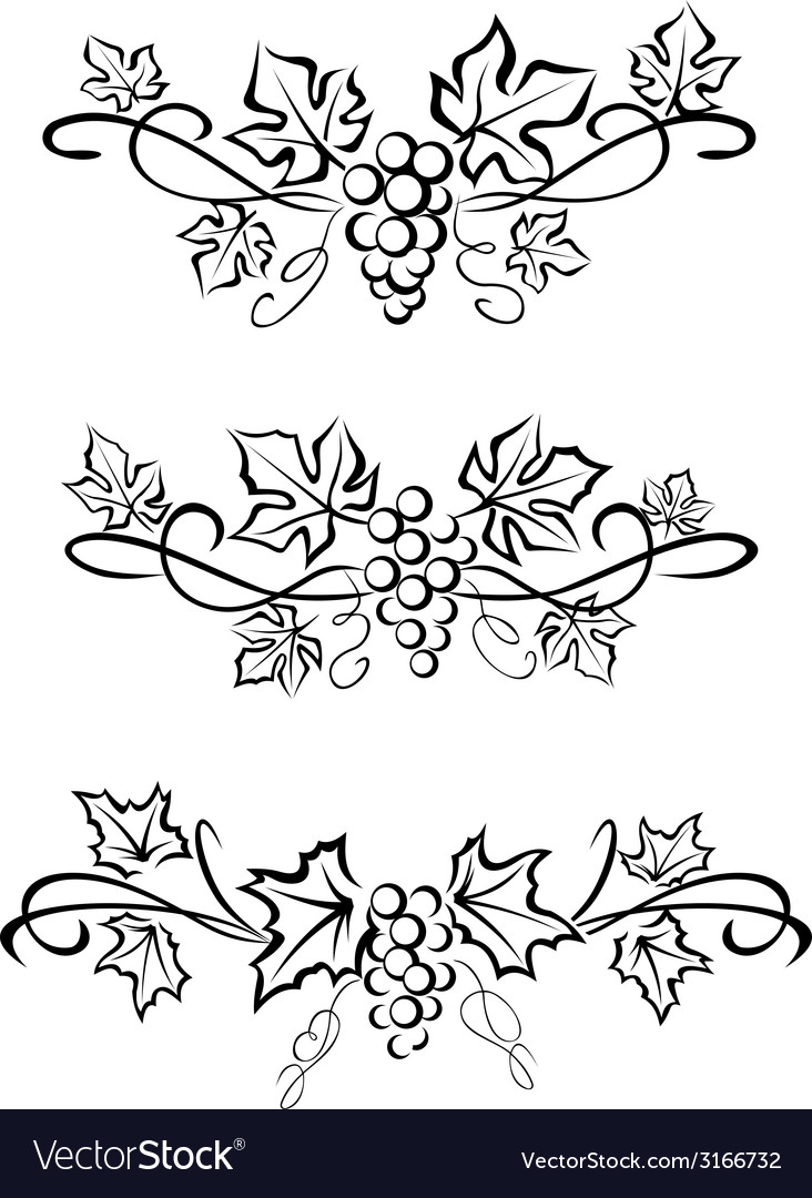 Grape branchs and leaves vector | Price: 1 Credit (USD $1)