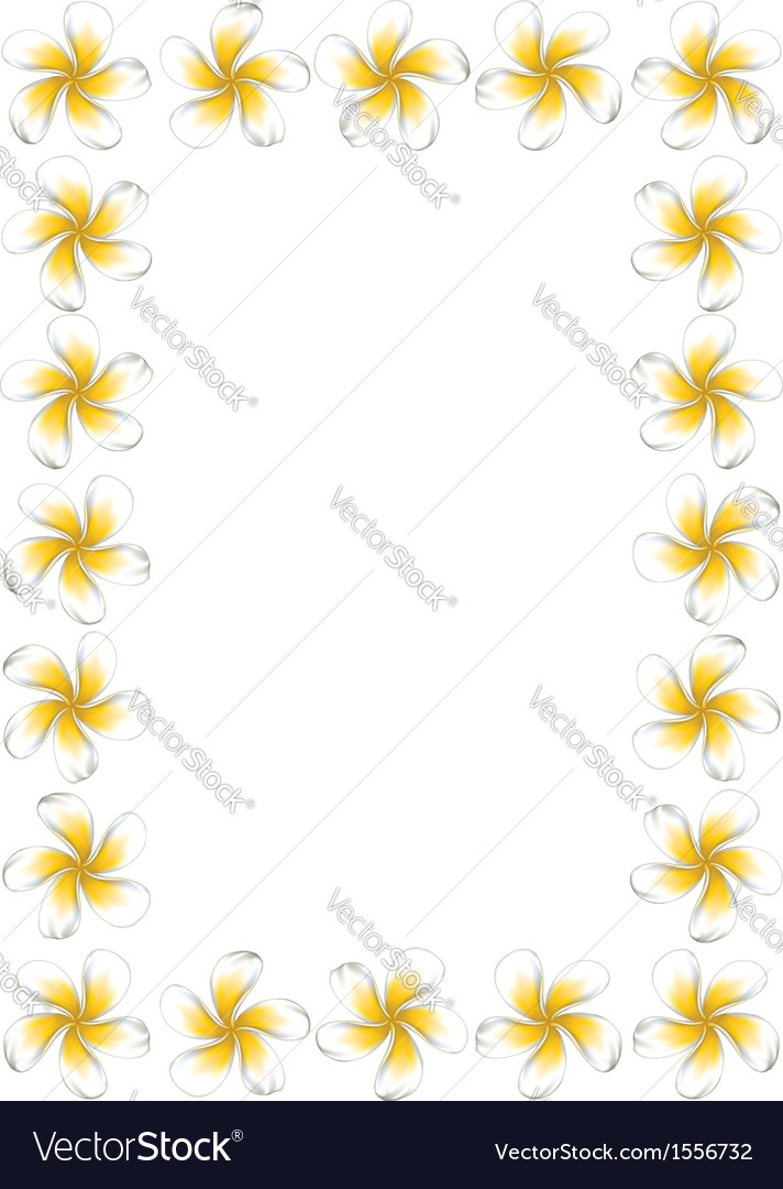White frangipani flowers frame3 vector | Price: 1 Credit (USD $1)