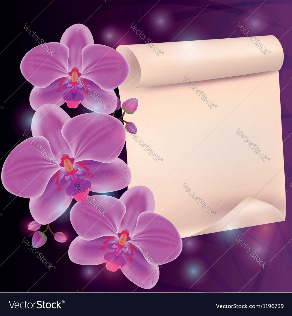 Greeting card with exotic flower orchid and paper vector | Price: 1 Credit (USD $1)