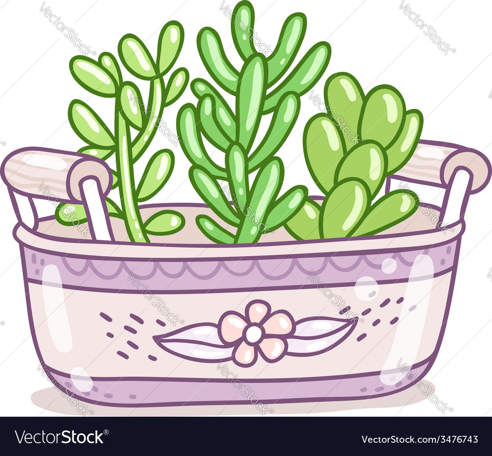 Succulents in a pot vector | Price: 1 Credit (USD $1)