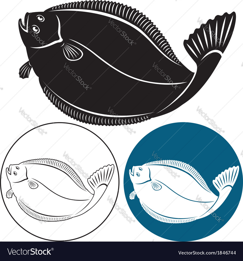 Halibut vector | Price: 1 Credit (USD $1)