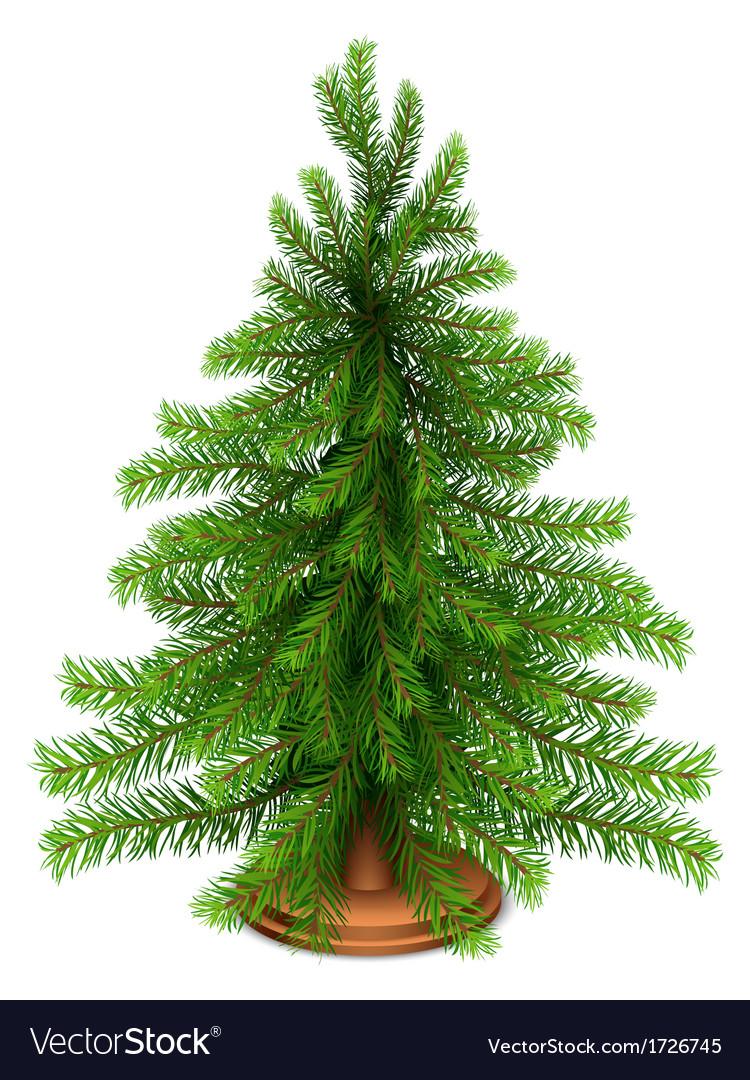 Christmas fir tree vector | Price: 1 Credit (USD $1)