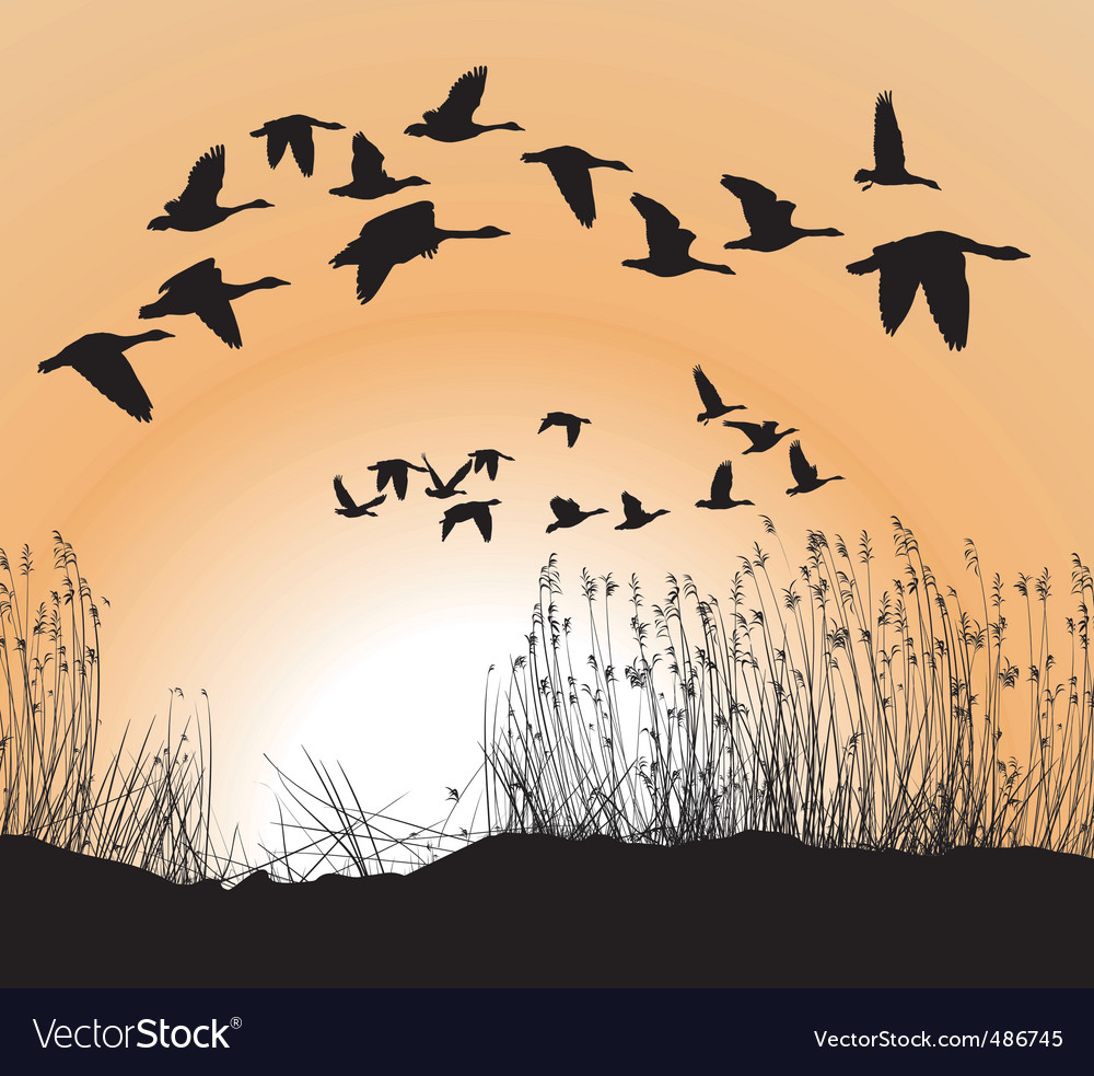 Reeds and geese vector | Price: 1 Credit (USD $1)
