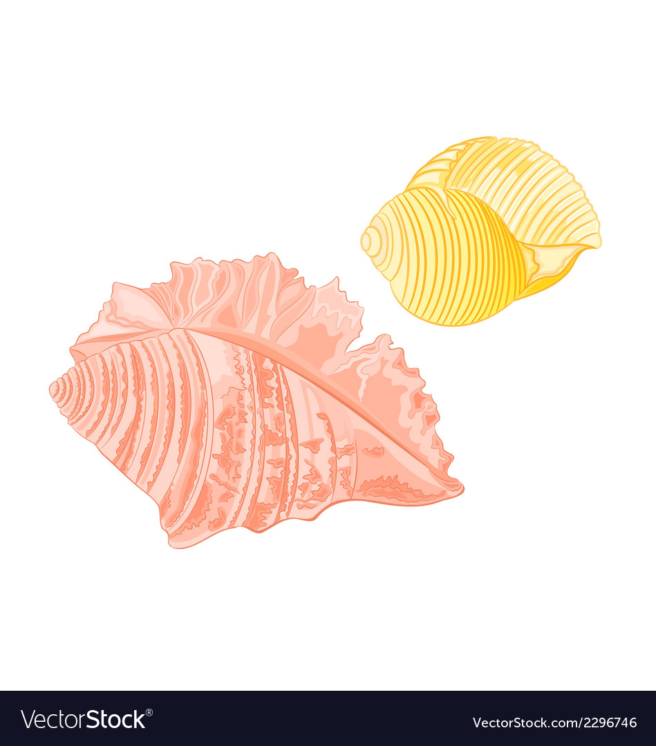 Collection-marine-seashells vector | Price: 1 Credit (USD $1)