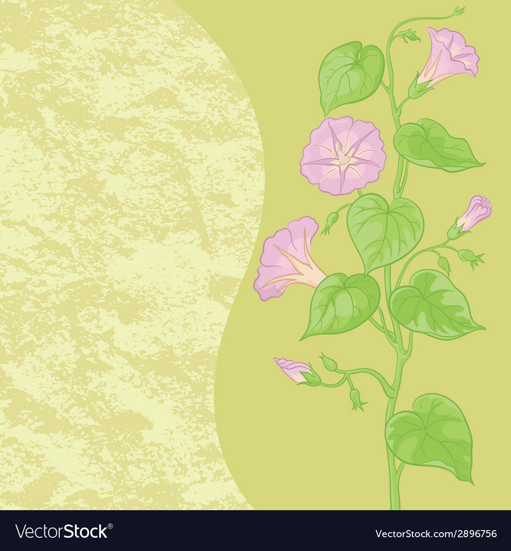 Flowers ipomoea and abstract pattern vector | Price: 1 Credit (USD $1)