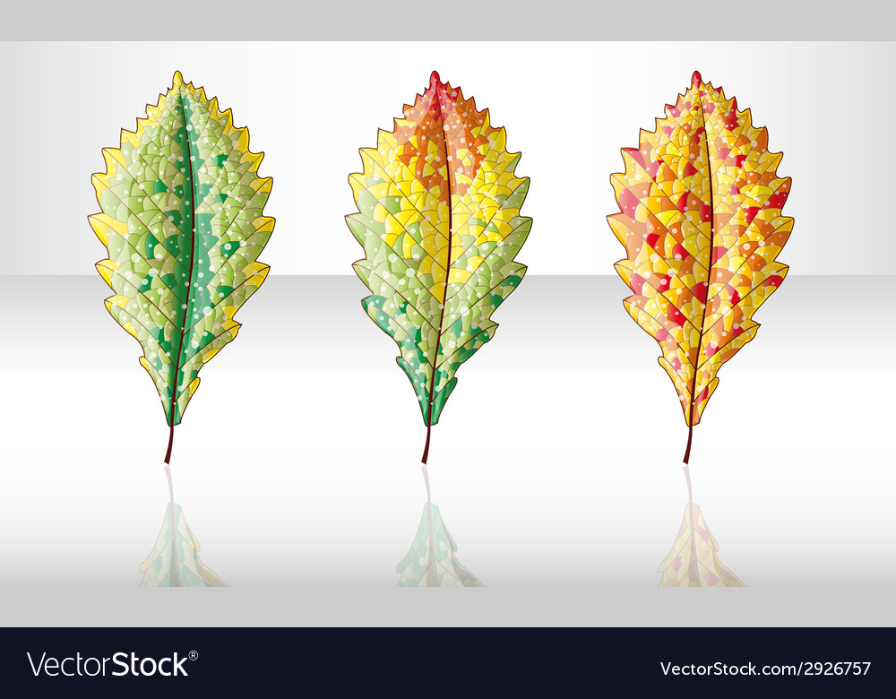 Autumn colorful leafs vector | Price: 1 Credit (USD $1)