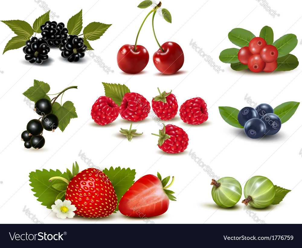 Big group of fresh berries and cherries vector | Price: 1 Credit (USD $1)