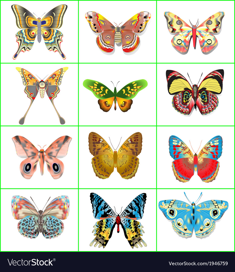 Set of decorative butterflies vector | Price: 1 Credit (USD $1)
