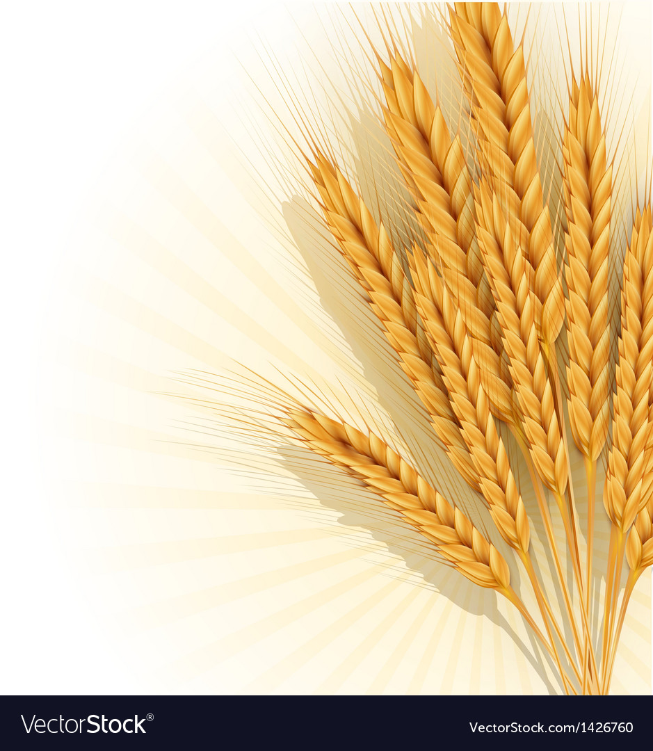 Background with gold ears of wheat vector | Price: 1 Credit (USD $1)