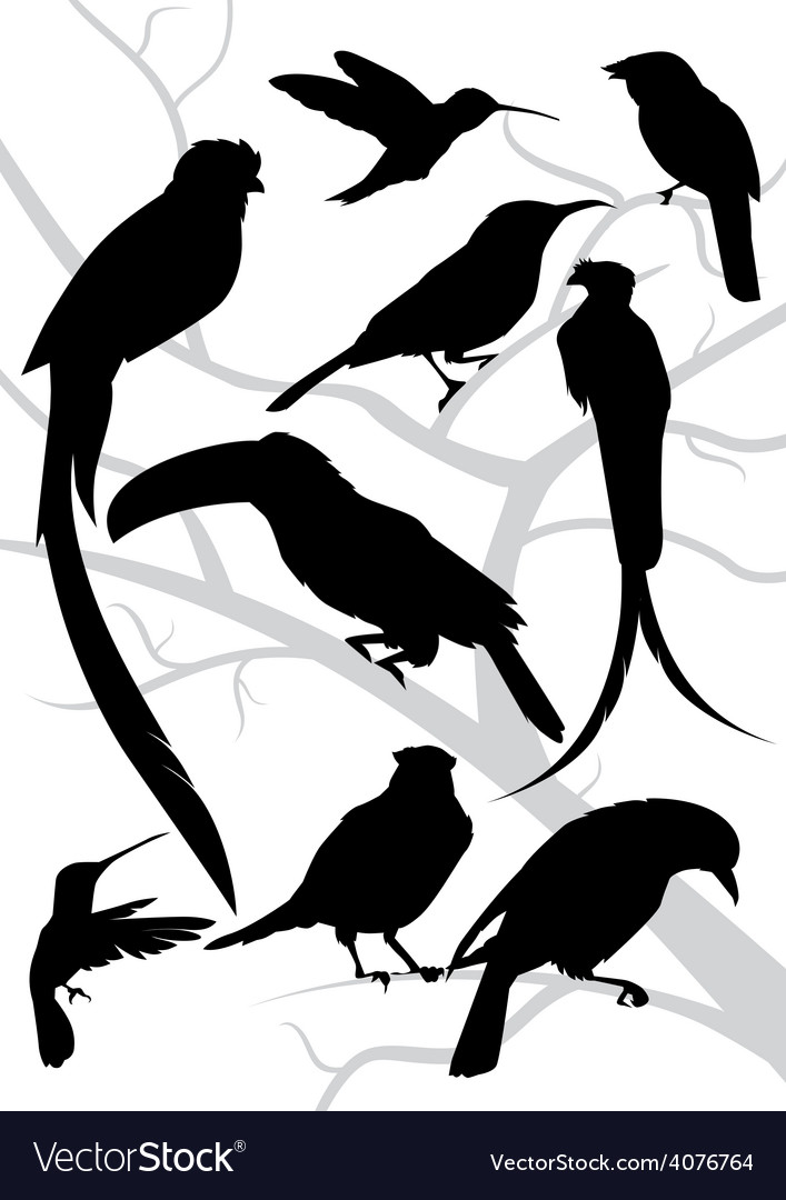 Silhouettes of tropical birds vector | Price: 1 Credit (USD $1)