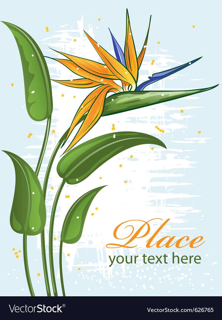 Strelitzia bird of paradise flower vector | Price: 1 Credit (USD $1)
