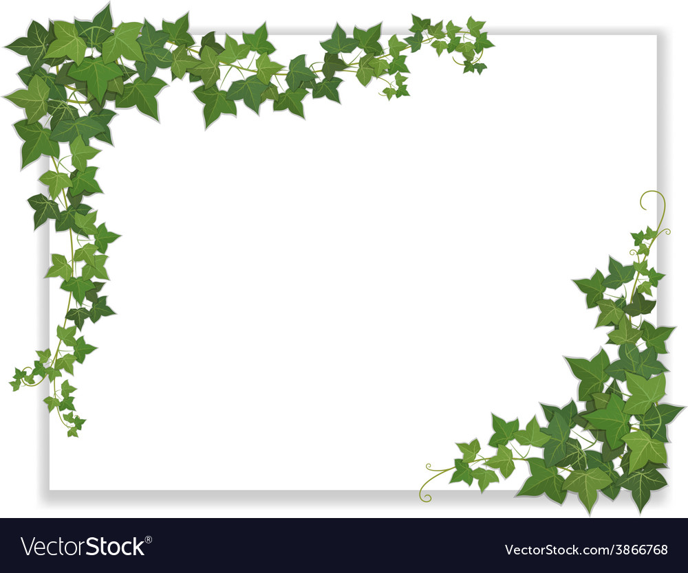 White sheet entwined with ivy vector | Price: 1 Credit (USD $1)