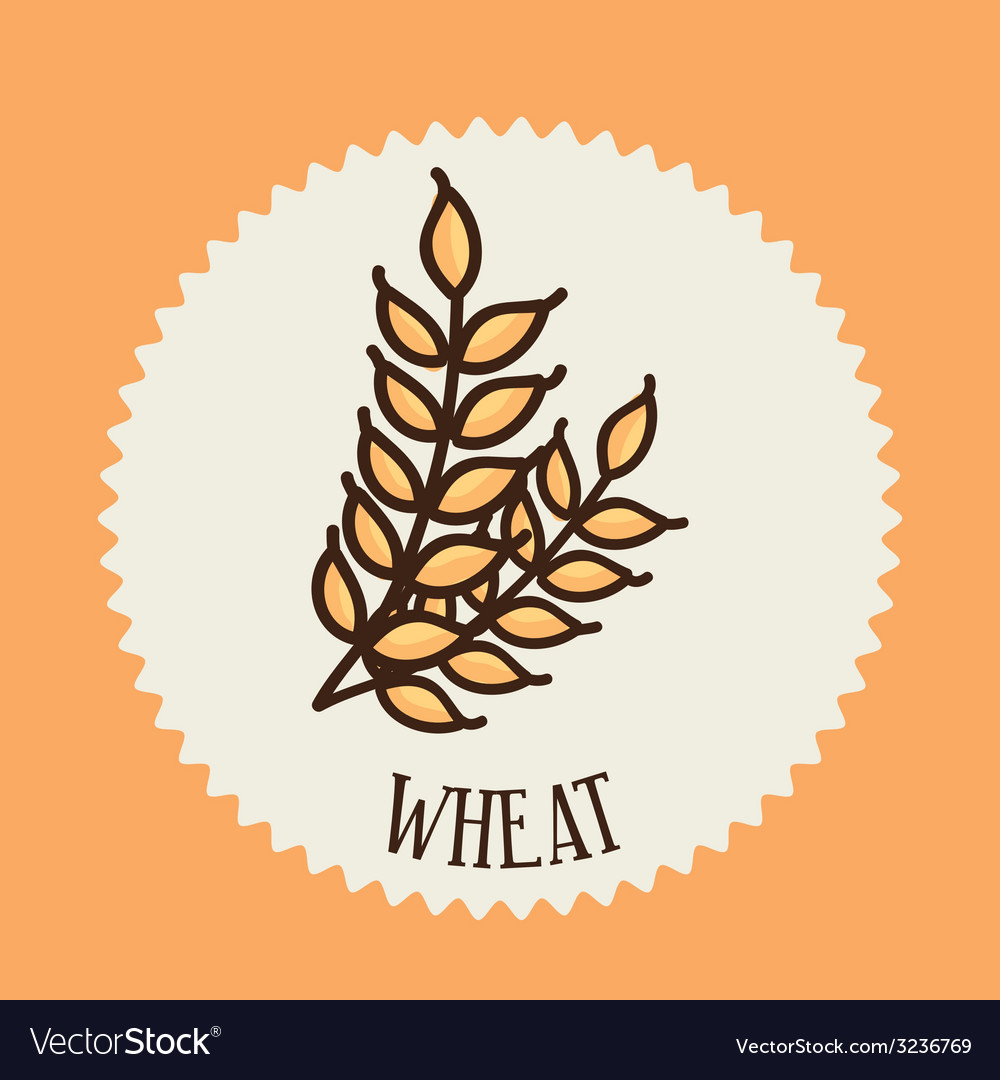 Wheat design vector | Price: 1 Credit (USD $1)