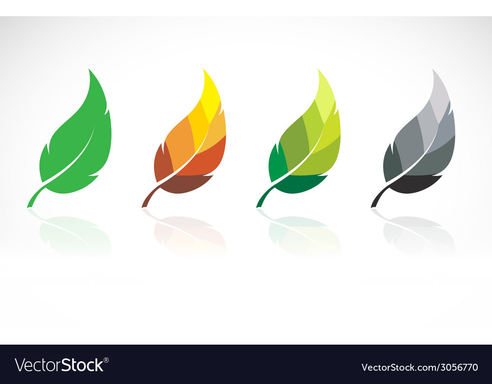 Image of leaves design vector | Price: 1 Credit (USD $1)